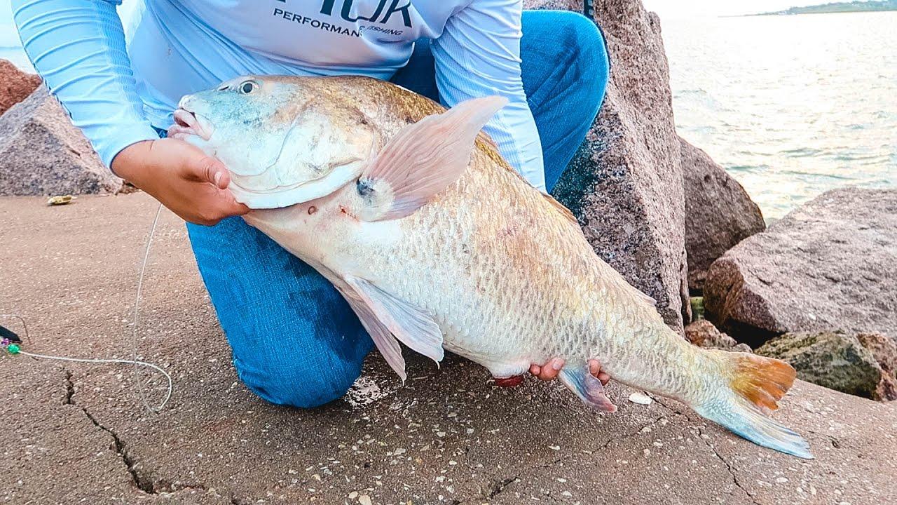38 inch black drum youtube for Galveston fishing report seawolf park