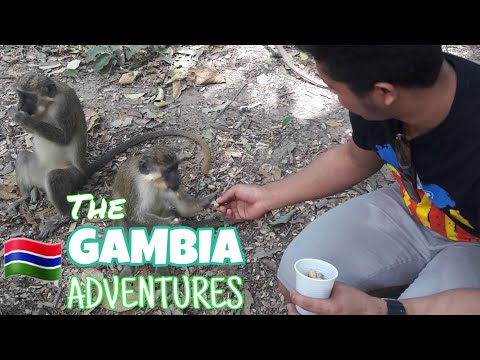 The Gambia Adventure!  Meeting MONKEYS and CROCODILES!  | EngineCadet Perl | Travel Vlog #7