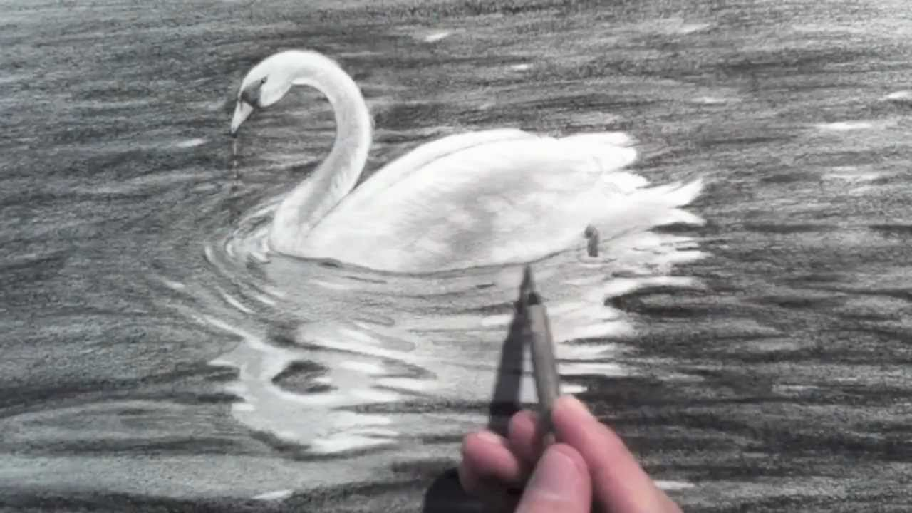 drawing a swan time lapse youtube