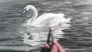 Drawing a Swan - Time Lapse