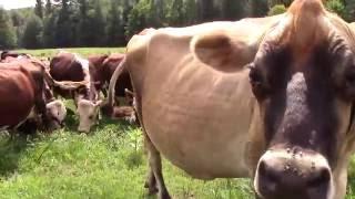 Farming Stories: Amy Klippenstein & Paul Lacinski of SideHill Farm - Hawley, MA