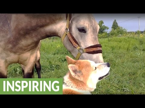 Horse and dog reunite after 7 months apart