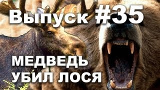 Выпуск 35: Медведь убил лося!  Охота на медведя видео 2013  Bear kills moose!