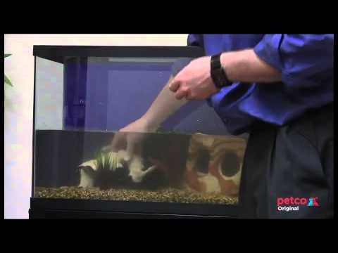 How To Set Up A Freshwater Aquarium (Petco)