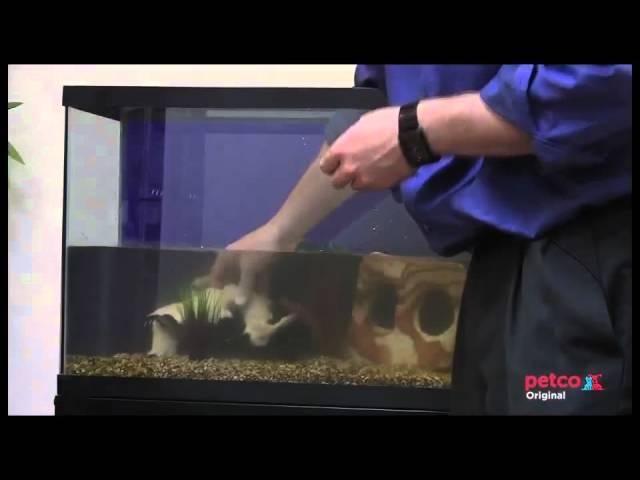 How To Set Up A Freshwater Aquarium Petco Youtube