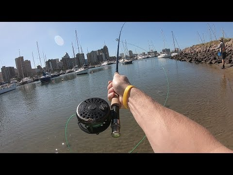 Fly Fishing Durban Harbour