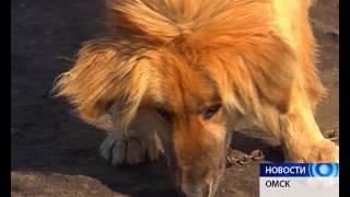 У собак омского приюта для животных