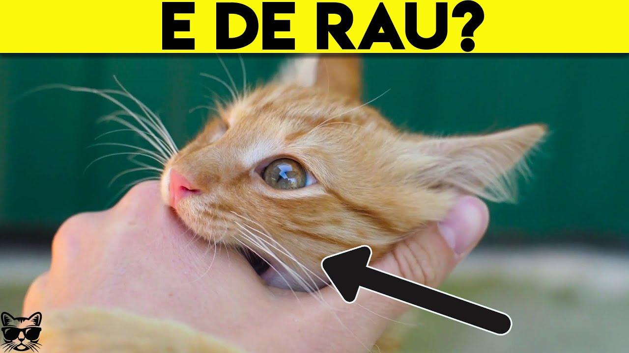 este posibil să restabiliți vederea unei pisici sindromul durerii în oftalmologie