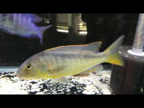 Update on 75 Gallon African cichlids tank | Update on prize delivery | Watch 1080p