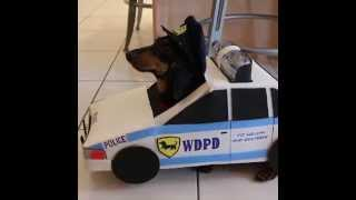 Cops & Robbers Part 2 - Crusoe Dachshund & Officer Oakley