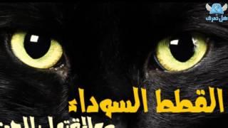 هل تعرف ما هي علاقة القطط السوداء بالجن