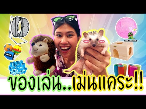 [EP4]เลือกของเล่น...ให้เม่นแคระ!! สำหรับมือใหม่ Hedgehog Toy!!