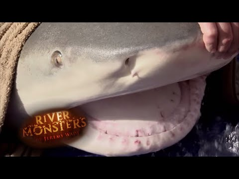 Jeremy Catches One Of The Largest Bull Sharks Ever Caught | SHARK | River Monsters