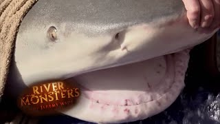 one-of-the-largest-bull-sharks-ever-caught-river-monsters