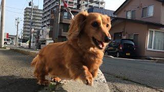 この日も最高気温30度超えの札幌にしてはとっても暑い日でした。 それで...