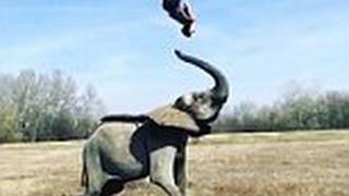 Elephantastic! Acrobat does impressive flip off an elephant&#39s trunk