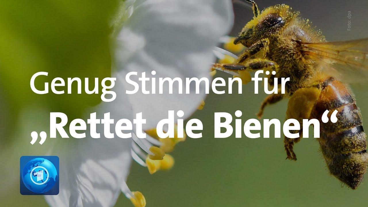 """""""Rettet Die Bienen"""": Volksbegehren In Bayern Erfolgreich"""