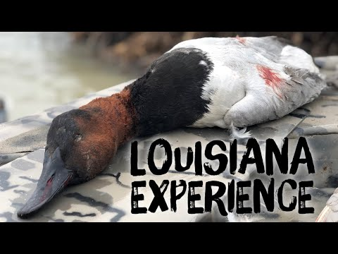 Louisiana Duck Hunting At It's Finest At Honey Brake Lodge