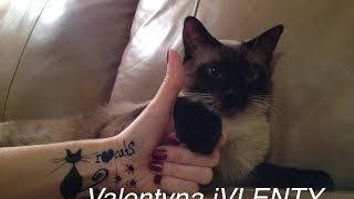 Смешной кот  =^..^= СИАМСКИЕ КОШКИ