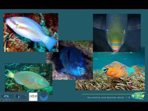 BREEF- Parrotfish & Healthy Coral Reefs