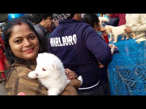 Cute Puppies For You At Galiff Street l Largest Pet Market Of India