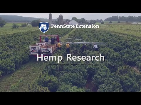 Hemp Research