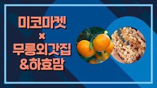 제주 특산품 특집 1부 새콤달콤 제주의 비타임 DAY