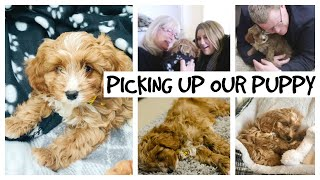 PICKING UP OUR PUPPY AND THE FIRST FEW DAYS 🐶