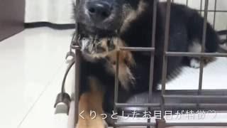 「面白動物動画」変顔連発!!熊犬!