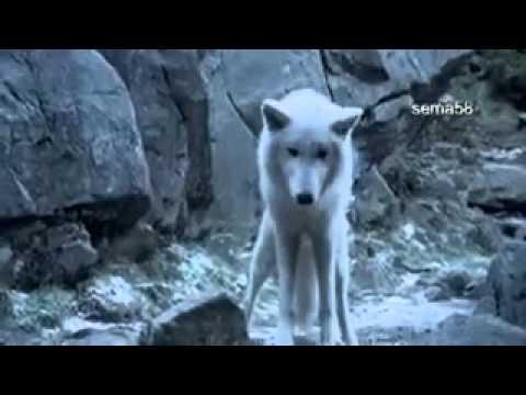 Смотреть фильм выживать с волками