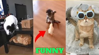 Cute Pets And Funny Animals Compilation😂🐕 TRY NOT TO LAUGH Cute Pets Funniest Video Cats And Dogs
