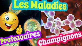 Les Maladies à Protozoaires et Les Maladies à Champignons