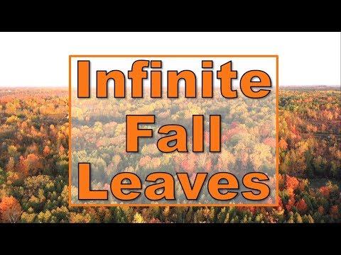 Infinite Fall Colour Autumn Leaves On Beaver Lake 2019