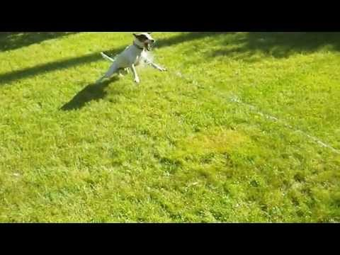 Бешеная собака — Стоковое фото © zetwe #37658697