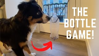 BRAIN TRAINING With My Dog! (SMART DOG ALERT)