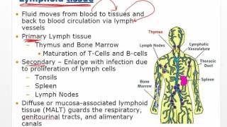 Chapter 11 Video   Disorders of Leukocytes