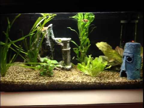 Aquascape aquarium holland