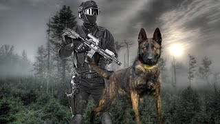 Belgian Malinois K9 Tactical Training !