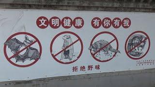 Коронавирус в Китае. Ноябрь: карантин закончился, возвращайтесь. Январь: всем сидеть и не дышать