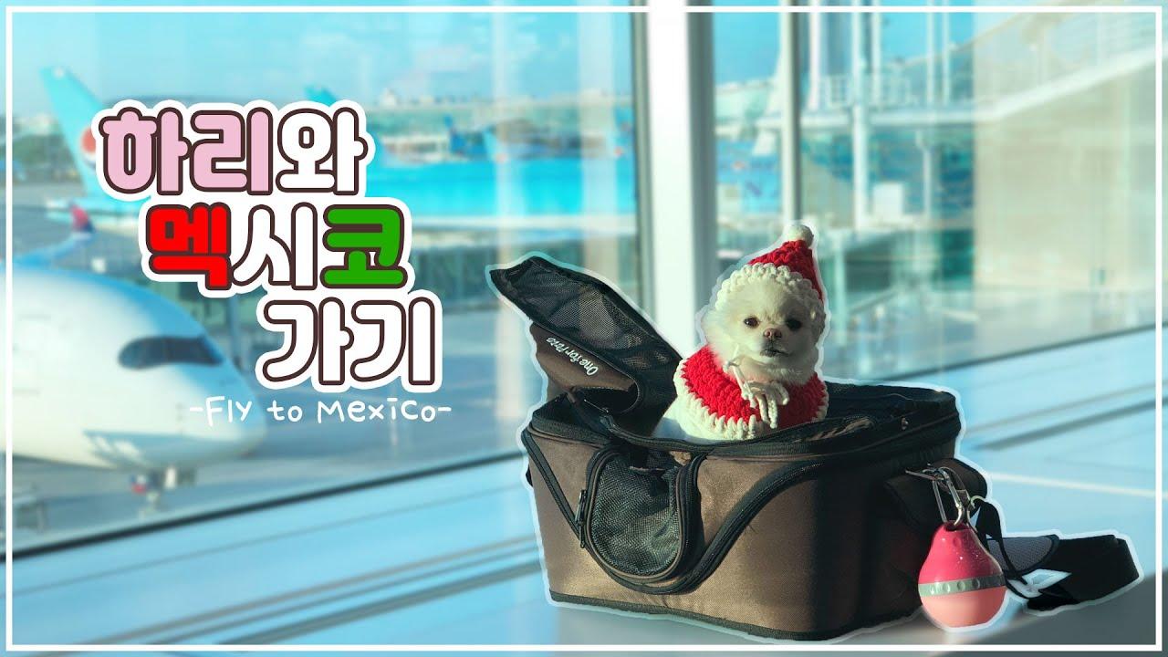 강아지와 함께 떠나는 멕시코 여행! 코로나시국 랜선여행 떠나볼까요?