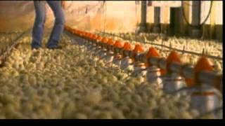Unser Essen - The Future of Food (USA 2004) - Trailer deutsch/german