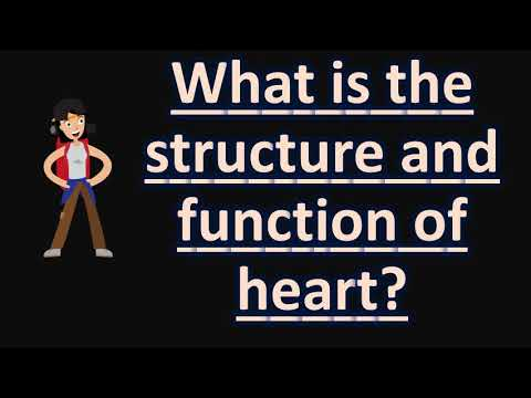 What is the structure and function of heart health faqs for what is the structure and function of heart health faqs for better life ccuart Gallery