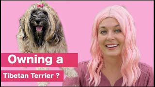 Owning a Tibetan Terrier? | What you need to know!