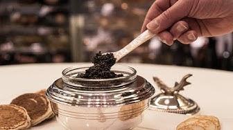 Planet Caviar. Depuis 1997 / Since 1997.