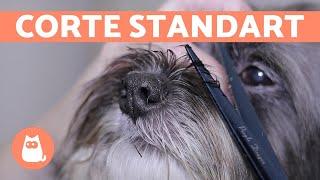 ¿Cómo cortar el pelo a un perro?  CORTE BÁSICO | Animal Salut
