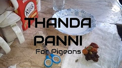 How to Protect Pigeons from Heat - Thanda panni for summer - save your pigeon with this cold drink