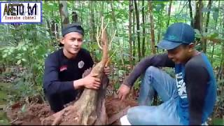 Video Berburu bahan bonsai kemuning download MP3, 3GP, MP4, WEBM, AVI, FLV Juni 2018