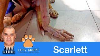 Hope Rescues Dog Named Scarlett with Broken Leg - @Viktor Larkhill Extreme Rescue