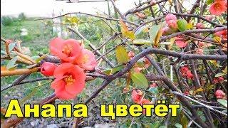 Большой пеший круг по цветущей Анапе