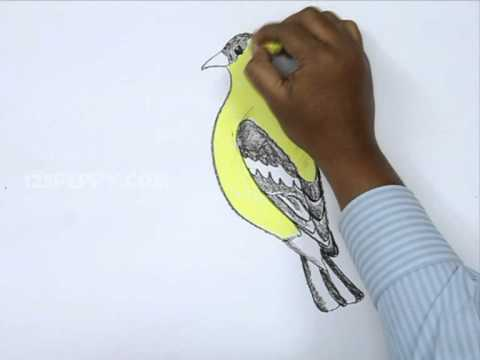 How to Draw American Goldfinch - YouTube